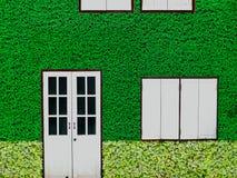 木窗口和绿色三叶草和海绵断送背景 免版税库存图片