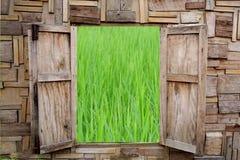 木窗口开头有绿色米领域看法  图库摄影