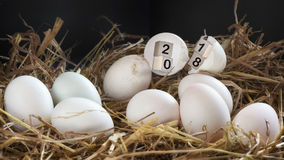 木立方体在蛋壳的第2018年 免版税库存照片