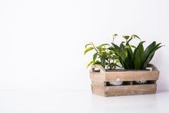木箱的家庭绿色植物 图库摄影