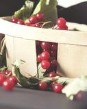 木篮子在她的在桌上的红色成熟莓果荚莲属的植物收集了 图库摄影