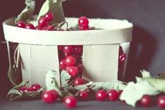 木篮子用荚莲属的植物收集的莓果  库存图片