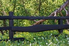 木篱芭和自然 免版税库存照片