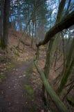 木篱芭在森林里 免版税库存照片