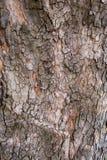 木纹理吠声 库存照片