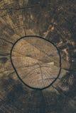 木纹理和背景 削减在葡萄酒样式的树干背景 树干关闭 被削减的树干纹理宏观看法  免版税图库摄影