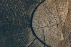 木纹理和背景 削减在葡萄酒样式的树干背景 树干关闭 被削减的树干纹理宏观看法  图库摄影