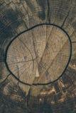 木纹理和背景 削减在葡萄酒样式的树干背景 树干关闭 被削减的树干纹理宏观看法  免版税库存照片