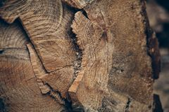 木纹理和背景 削减树干纹理 被削减的树干纹理和背景宏观看法  免版税图库摄影