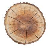 木纹理圆环 免版税库存图片