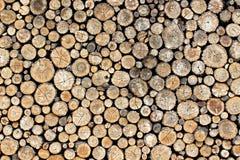 木纹理圆环 库存照片