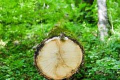 木纹理在绿色森林里 库存照片