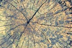 木纹理或木头背景 内部外部装饰的木头和工业建筑设计 免版税库存图片