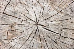 木纹理树桩 短剖面 图库摄影