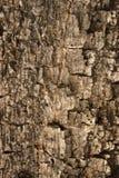 木纹理皮肤背景 免版税库存照片