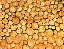 木纹理背景有从大树切开和小的许多日志 免版税库存图片