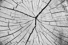 木纹理裁减树干 图库摄影