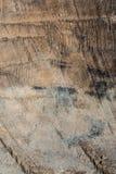 木纹理非常老橡木,粗砺的木头不是一致的 免版税库存图片