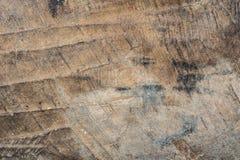木纹理非常老橡木,粗砺的木头不是一致的 库存照片