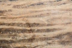 木纹理非常老橡木,粗砺的木头不是一致的 免版税图库摄影