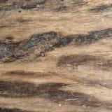 木纹理非常老橡木,粗砺的木头不是一致的 图库摄影