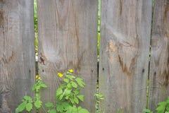木纹理(木背景) 免版税图库摄影