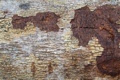 木纹理(从森林的树) 免版税库存照片
