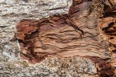 木纹理(从森林的树) 图库摄影