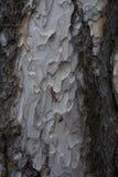 木纹理 背景老面板 库存图片