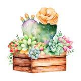 木罐和仙人掌开花的水彩手画多汁植物 库存例证