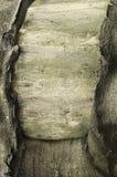 木羊皮纸 库存图片