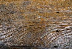 木老的纹理 库存图片