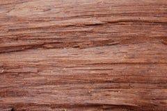 木背景和纹理 库存图片