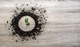 木背景概念地球堆了圈子盘纹理着陆中心新芽荷兰芹香菜水平绿色的弹簧 库存图片