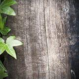 木背景的常春藤 免版税图库摄影