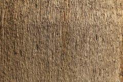 木背景的纹理 库存图片