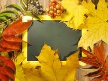 木背景离开苹果南瓜构成秋天地方11月,蘑菇,文本的锥体 库存图片