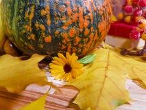 木背景离开苹果南瓜构成秋天bokeh 11月,蘑菇,爆沸 免版税库存图片