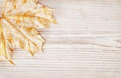 木背景纹理和叶子,秋天白色木板 免版税库存照片