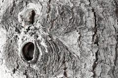 木背景详细资料老纹理的视窗 您的设计的照片 库存照片