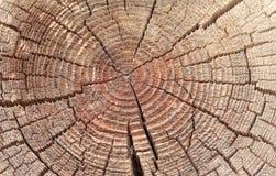 木背景,圈子 库存照片