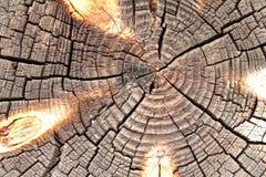 木背景,圈子 免版税库存照片