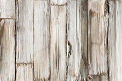 木背景,白色木板条纹理,排柱 免版税库存照片