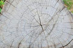 木背景 纹理 森林绿叶采蘑菇树桩结构树 免版税库存照片