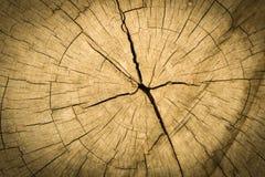 木背景 纹理 森林绿叶采蘑菇树桩结构树 免版税库存图片