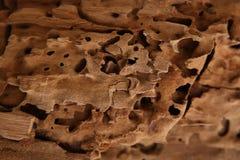 木背景 自然秀丽 免版税图库摄影