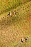 木脏的板条 免版税库存照片