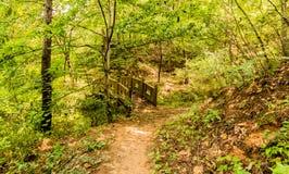 木脚桥梁在森林地公园 免版税库存图片