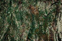 木自然的纹理 库存图片