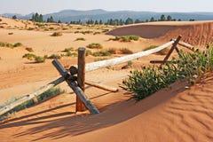 木范围在珊瑚桃红色沙丘国家公园 免版税库存照片